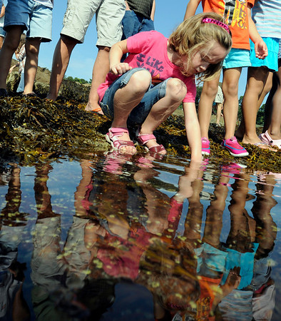 Beverly: Audrey Kasper, 5, of Beverly searches for ocean life in a West beach tidepool during a Trails and Sails event.   photo by Mark Teiwes / Salem News