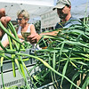 Salem: A customer purchases garlic scapes from Beth Pinanski, left , and Mike Raymond from First Light Farm in Hamilton during the opening day of the Salem Farmers' Market at Town Hall Square.  photo by Mark Teiwes / Salem News