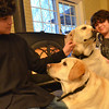 Topsfield: Quinn Giraud, 11, and his brother Zane, 15 sit in front of a fireplace with their yellow labs.  Freddy, right, broke through ice on the edge of the Ipswich River.  Ginger, his sibbling, barked until help came.