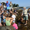 Beverly: Dr. Robert Buchsbaum, right, a conservation scientist of Massachusetts Audubon and a Salem Sound Coastwatch board member, guides a large group exploring the snails, crabs and seaweed in the tidepools of West Beach.  This was one of many Trails and Sail weekend events.  photo by Mark Teiwes / Salem News