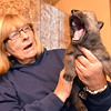 Ipswich: A new 17-day-old wolf pups stretches its howling muscles held by Joni Soffron, Wolf Hollow owner. photo by Mark Teiwes / Salem News