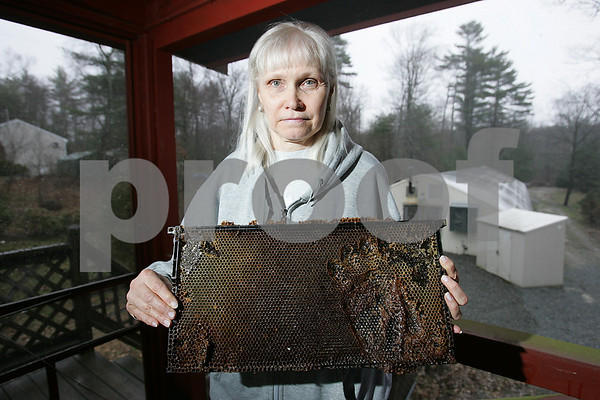 """Middleton: Linda Wilkins holds a honey screen from the beehives in her backyard on Mill Street in Middleton, which a bear invaded to get at the honey, leaving a paw print in the screen and the hives in disarray. Wilkins and her husband have lived in their home for 30 years, and have never seen a bear in the area. """"Hopefully he moves out, and doesn't move in,"""" she said. Photo by Matthew Viglianti/Staff Photographer Tuesday, April 21, 2009."""