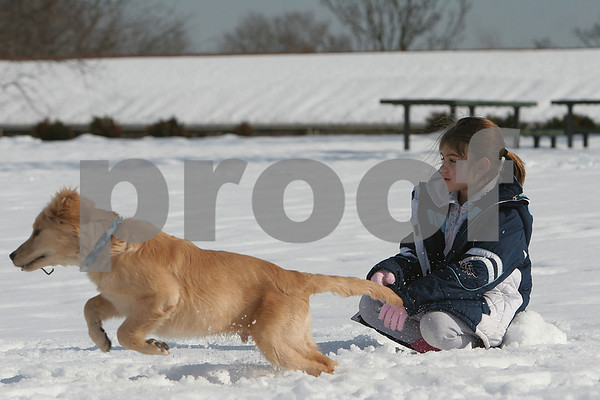 Salem: Gabrielle Tringali, 10, from Malden watches as her dog, Ozzy, a 5-month-old Golden Retriever, bolts through the snow to chase a snowball she threw while playing in the park at Winter Island in Salem on Sunday afternoon. Photo by Matthew Viglianti/Staff Photographer Sunday, February 1, 2009.