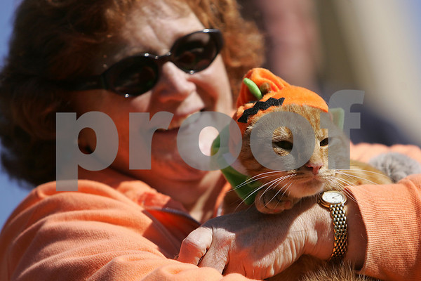 Salem: Pumpkin, a 1-year-old male, peers out at the crowd from under his halloween costume while being held by his owner, Candi Daniele of Salem, during the Offical Cat of Salem contest on Salem Common on Sunday. Pumpkin finished third in the contest. Photo by Matthew Viglianti/Staff Photographer Sunday, October 12, 2008.