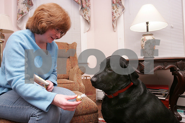Beverly: JJ, a four-year-old black Labrador retriever, obeys his owner, Lauren Noonan of Beverly, and ignores a chocolate treat while at their home on Monday. Last fall, JJ ate a large bag of York Peppermint Patties. Photo by Matt Viglianti/Salem News Monday, October 27, 2008
