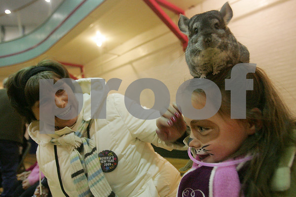 Beverly: Brianna Smith, 6, from Maryland tries to sit still with a chinchilla resting on her head as her grandmother, Kathy Aubertin from Beverly, leans over to inspect the unusual head wear during a presentation by Curious Creatures at the Cabot Street YMCA during Beverly's First Night celebration. Photo by Matthew Viglianti/Staff Photographer Wednesday, December 31, 2008.
