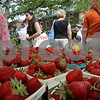 Salem: A sea of strawberries waits for customers at a stand run by Clark Farm from Danvers at the debut of the weekly Salem Farmers Market in Derby Square on Thursday. Photo by Matthew Viglianti/Staff Photographer Thursday, June 25, 2009.