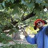Salem:<br /> John Zannino cuts branches off a large tree limb that fell at the Old Burying Point Cemetery in Salem.<br /> Photo by Ken Yuszkus, The Salem News, Wednesday, September 25, 2013.