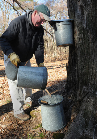 Ken Yuszkus/Staff photo: Wenham:  Gary Johnson collects sap from the buckets on the maple trees at Cedar Pond Area in Wenham before taking the buckets off the trees for the season. The cold winter with not many warm days had a negative effect on the volume of maple sap collected locally. Gary works for the Ipswich River Wildlife Sanctuary where they will still keep some buckets on the treees for a while longer.