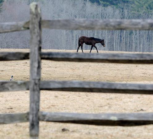 Ken Yuszkus/Staff photo: Hamilton: A horse roams a pasture off Bay Road in Hamilton.