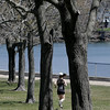 KEN YUSZKUS/Staff photo.     On a bright sunny Wednesday a jogger runs by the row of budding trees at Dane Street Beach.     04/20/16