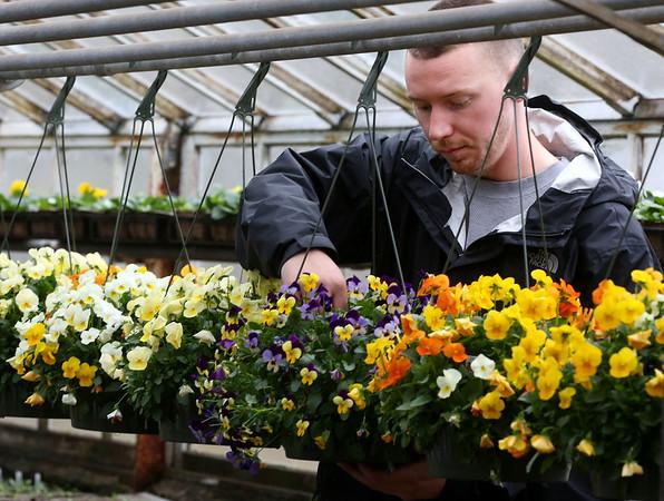 Tillie's Farm's Billy Murphy looks over the various flowers