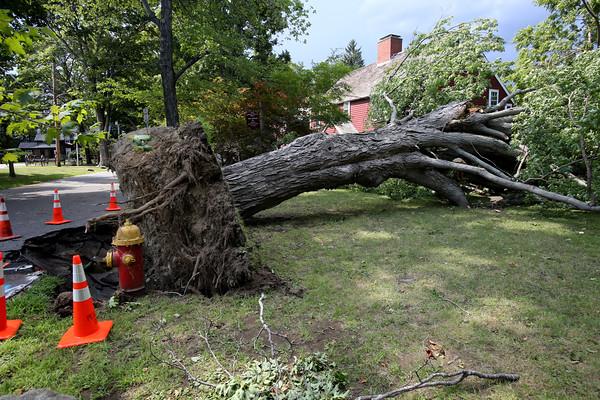 KEN YUSZKUS/Staff photo.    Fallen tree at the Nathaniel Felton Jr. House in Peabody.    8/4/15