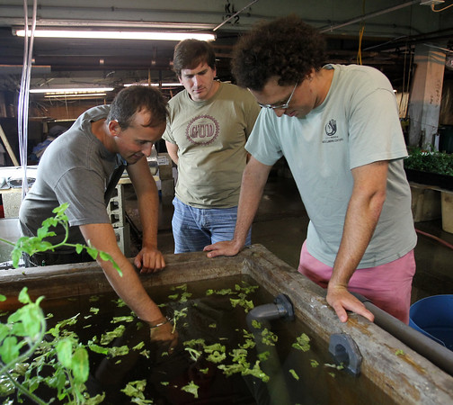 DAVID LE/Staff photo. Redemption Fish Company Co-owners Andy Davenport, left, and Colin Davis, right, along with ______, look into a large tank containing privately raised tilapia. 8/28/15.