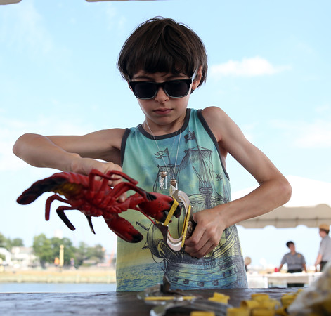 DAVID LE/Staff photo. Nine-year-old Jason Walfield, of Lynn, learns how to put rubber bands around the claws of a lobster at the Salem Heritage Festival. 8/7/16.