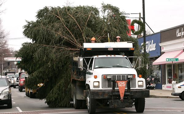 KEN YUSZKUS/Staff photo.   The 3200 lb. Norway spruce tree is transported down Maple Street in Danvers.  12/01/15.