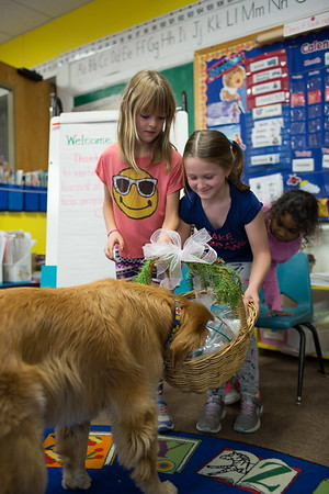 Jared Charney / Photo From L-R: Horace Mann Elementary 2nd Graders Francis Jones, 8, Annie Bednar, 7, and Yeilani Ravelo, 7 present a basket of hand man snowmen to therapy dog Patrick to be delivered to residents at the Kaplan House, Thursday, December 8, 2016.