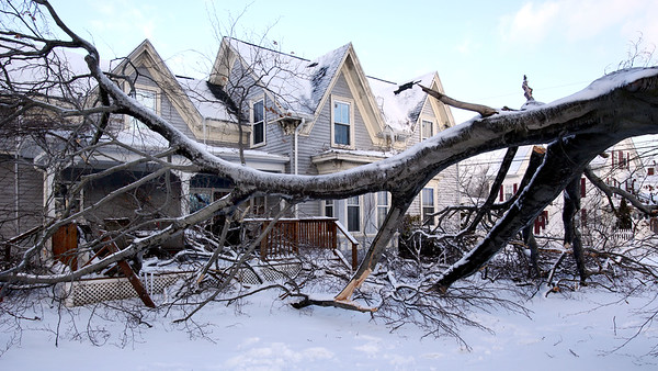 large tree fell at 47 Lynn Street in Peabody