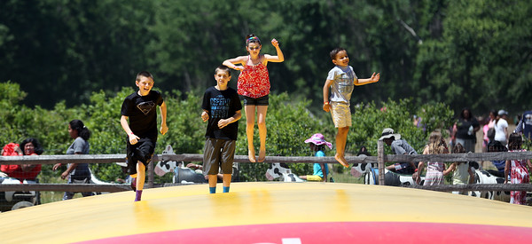 DAVID LE/Staff photo. A couple kids run and jump along a bouncy-mat at the annual Strawberry Festival held at Connors Farm in Danvers as part of the Danvers Family Festival. 6/18/16.