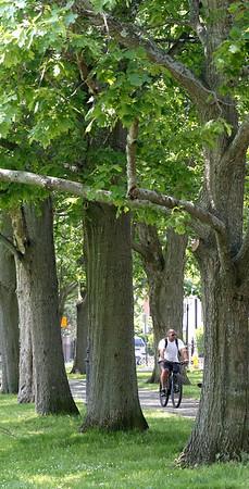 Trees at Salem Common