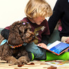 Ken Yuszkus/Staff photo: Hamilton:  Gavin Ruffell, 6, of Hamilton, reads a book while holding onto Tessie who is a 3-year-old labradoodle and a certified therapy dog. Tessie comes to the Hamilton-Wenham Public Library so beginning readers can gain confidence by cuddling up and reading to her.