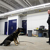 Salem K-9 officer John Bedard and his dog Thor will be going into Boston this April to provide security at the Boston Marathon. There will be heightened security this year in light of the Marathon bombings last year. DAVID LE/Staff photo