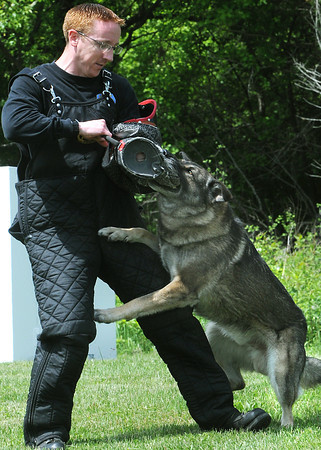 KEN YUSZKUS/Staff photo. Sgt. Joe Riley in protective gear is attacked by Blitz at the Middleton Jail during a demonstration to promote the upcoming law enforcement K-9 competition taking place this weekend.   5/29/14.
