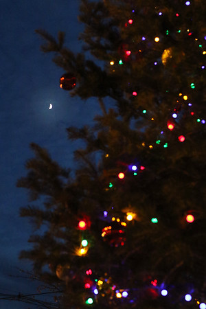 HADLEY GREEN/Staff photo<br /> The moon peaks through lit branches during the tree lighting ceremony outside city hall in Peabody. <br /> 11/25/17