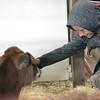 KEN YUSZKUS/Staff photo.  Daniel Bass, 11, of Watertown, pats a calf in it's pen at the Topsfield Fair.  10/06/14