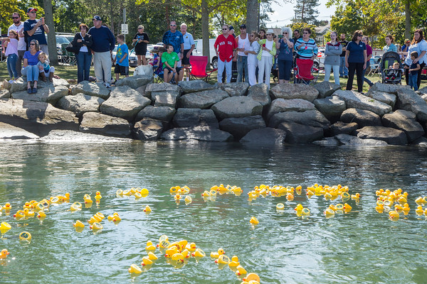 PARKER FISH/ Photo. Spectators watch their rubber ducks float by on their way to the finish line during the Kiwanis Club annual rubber duck race in Danvers. 9/17/16