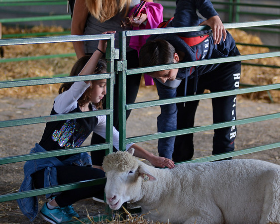 RYAN HUTTON/ Staff photo<br /> Nina Rivera, 8, left, and her cousin Kyle Doherty, 13, of Saugus, reach down to pet a sheep in livestock building at the Topsfield Fair on Monday.