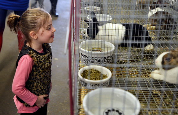 RYAN HUTTON/ Staff photo<br /> Morgan O'Connor, 4, of Billerica, gets up close and personal with a black and white dutch rabbit in the rabbits and cavies building at the Topsfield Fair on Monday.