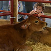 RYAN HUTTON/ Staff photo<br /> Givlianna Sacco, 20 months, of Wouburn, reaches out to pet a calf in the livestock building at the Topsfield Fair on Monday.