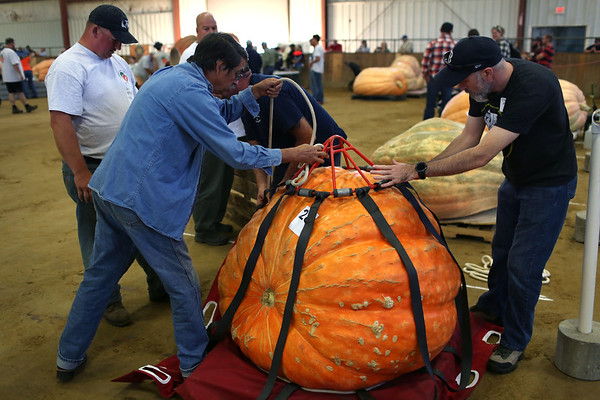 HADLEY GREEN/Staff photo<br /> Chris Horne, left, and Chris Hayden, right, help tie up a pumpkin to be weighed at the Giant Pumpkin Weigh-Off at the Topsfield Fair.<br /> 09/29/17