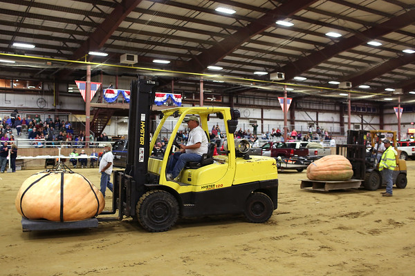 HADLEY GREEN/Staff photo<br /> Tractors carry pumpkins to the scale at the Giant Pumpkin Weigh-Off at the Topsfield Fair.<br /> 09/29/17