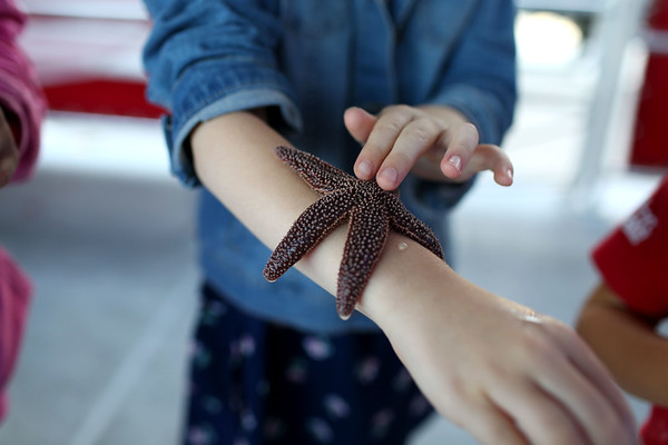 HADLEY GREEN/Staff photo<br /> Amanda Sabin, 6, of Danvers, touches a starfish on board the Sea Shuttle, an educational marine life boat, at the Beverly Harbor Fest at Glover Wharf Marina.<br /> 09/09/17
