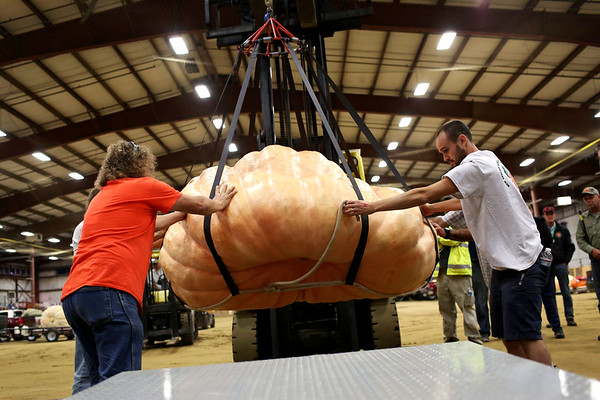 HADLEY GREEN/Staff photo<br /> Mike Flemming, left, and Jamie Graham, right, position Woody Lancaster's 2,003.5 pound pumpkin onto the scale at the Giant Pumpkin Weigh-Off at the Topsfield Fair.<br /> 09/29/17