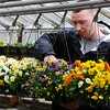 Tillie's Farm's Billy Murphy looks over the various flowers