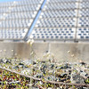 HADLEY GREEN/ Staff photo<br /> Baby flowers on the ground at the Greenergy Park Solar Field.