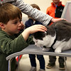 "HADLEY GREEN/Staff photo<br /> Gaelen Desmond, 3, of Ipswich, pets Toto, a cat who was rescued after a tornado hit Brimfield, Massachusetts in 2011. Author Jonathan Hall wrote ""Toto the Tornado Kitten,"" a children's book inspired by the cat's tale, and read his story aloud at the Ipswich Public Library.<br /> <br /> 04/18/18"