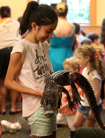 HADLEY GREEN/Staff photo<br /> Sophia Greenberg, 12, of Middleton, holds an American alligator at the Rainforest Reptiles show at the Flint Library in Middleton. 8/15/17