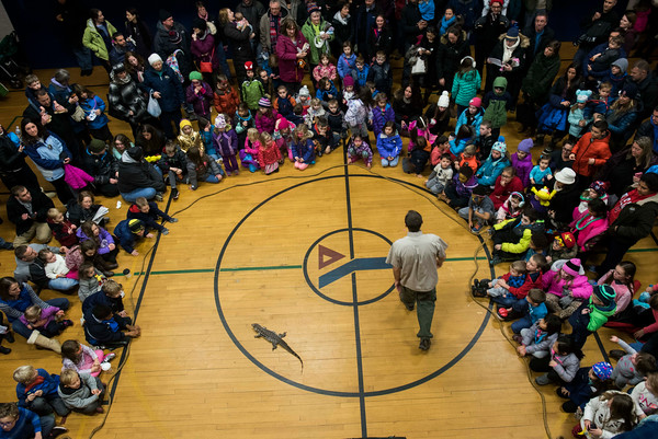 Corey Kummell introduces the crowd to Chili, an American alligator during the Curious Creatures show at Beverly's New Year's celebration on Cabot Street. 12/30/16