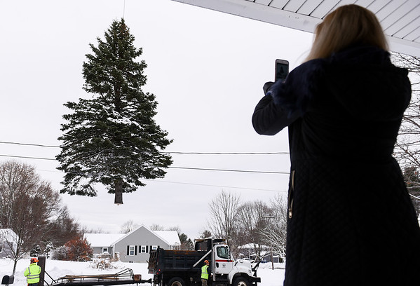 Danvers Holiday Tree courtesy of the Toomey Family