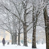 Marilyn Cohn, of Salem, walks during the snow in Salem Common