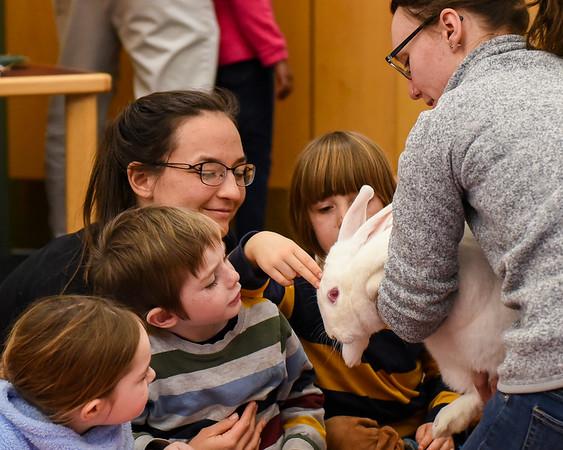 Reading with Rabbits at Hamilton-Wenham Library