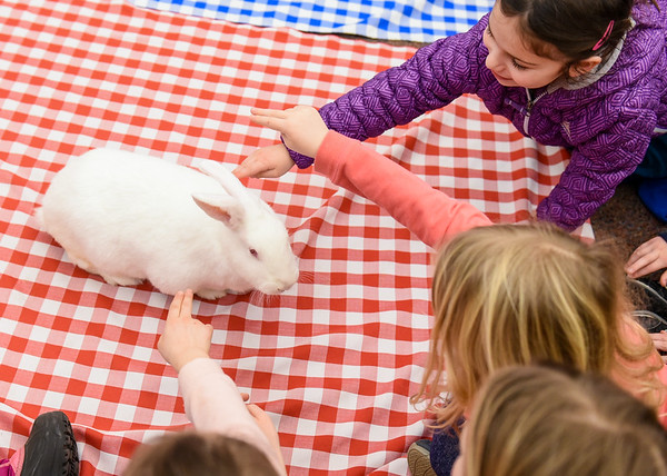 Reading with Rabbits at Hamilton-Wenham Library