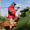 HADLEY GREEN/Staff photo<br /> Nick Daley of Salem waters squash plants in the Salem Greenspace garden at Palmers Cove Park in Salem. The community garden is holding a free farmers market from 5 p.m. to 8 p.m. on Wednesday, July 11th that is open to the public. Fresh produce will be available. <br /> <br /> <br /> 07/10/2018