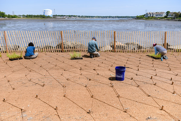 Volunteers planting seagrass in Collins Cove