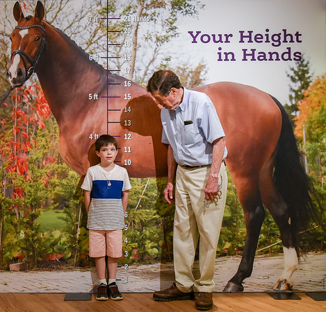 Equestrian Exhibit at the Wenham Museum