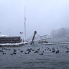 HADLEY GREEN/ Staff photo<br /> Mallard ducks weather the storm in a cove near The Willows in Salem during snowstorm Stella on March 14th, 2017.